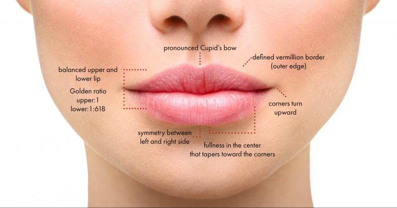 מבנה השפה